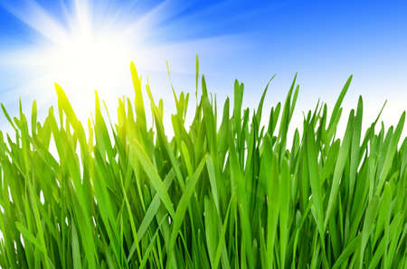 Spring green grass against a blue sky and a bright sun. Sunny Day