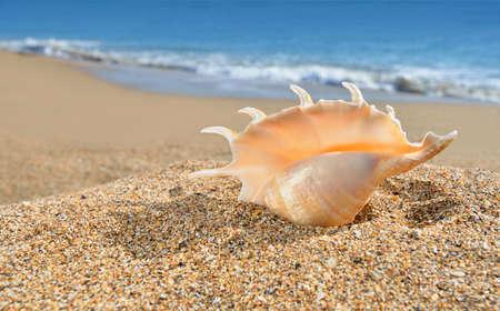Seashell on the yellow beach sand against blue sea Stock Photo