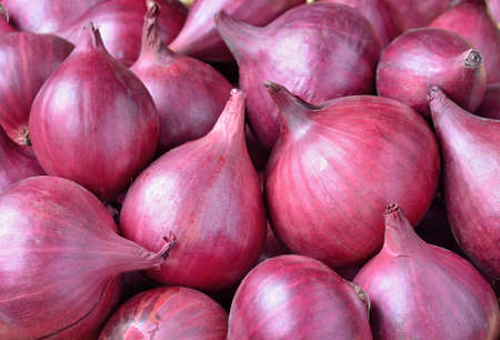red onion: Red onion close up