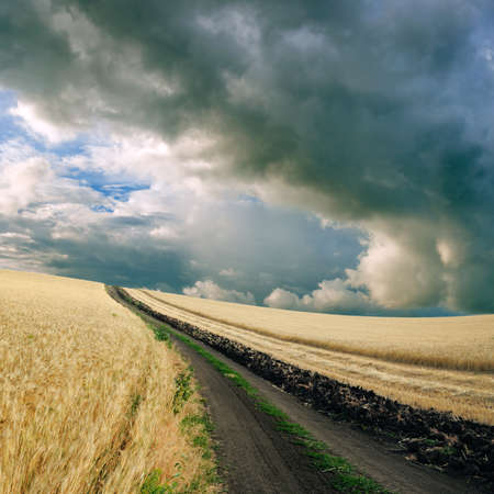 Cloudy sky over the wheat field photo