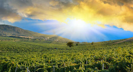 Sunrise in mountains over a grape field. Vineyards in the Crimean mountains photo
