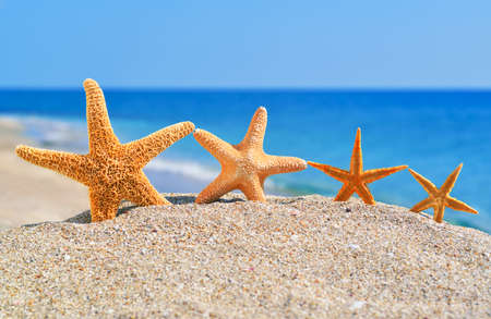 Starfishes on the beach against a blue sea 스톡 콘텐츠