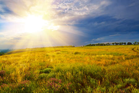 Summer landscape. Green field against a dramatic sunset photo