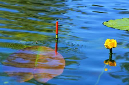 fishing bobber: Fishing bobber floating in the lake water among lilies