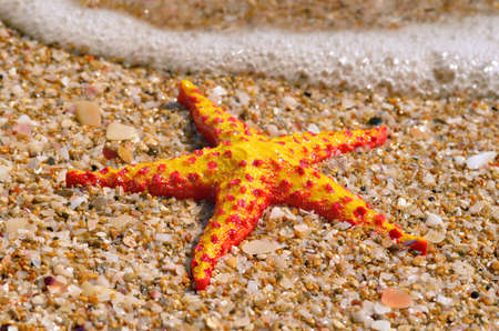 five pointed: Starfish lying on the beach against a sea foam Stock Photo