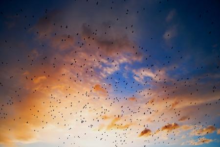 bandada pajaros: Bandada de aves contra la puesta de sol
