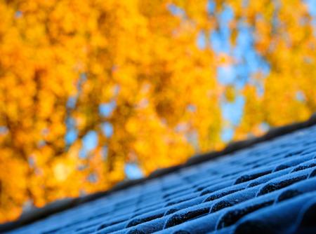 Première givre sur les tuiles feuilles d'automne dans backgound