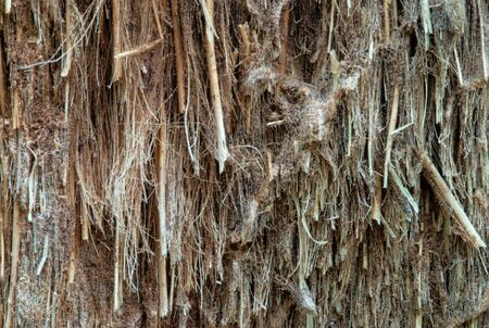 Close up of patterns and texture on bark photo