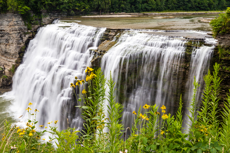 Looking at the wildflowers that grow along the side of the gorge near the middle falls on the Genesee river in Letchworth State Park in Castile New York.  This photograph was taken in the summer time when everything is in bloom. Stock Photo