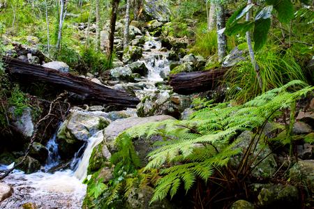 Newlands Forest stream