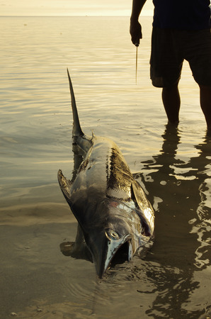 Fisherman with his gigantic fresh catch posing on the beach, a large swordfish photo