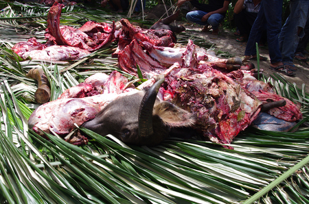 sacrificed: Slaughtered buffalo sacrificed at a traditionl funeral on Toraja highlands, Sulawesi, Indonesia