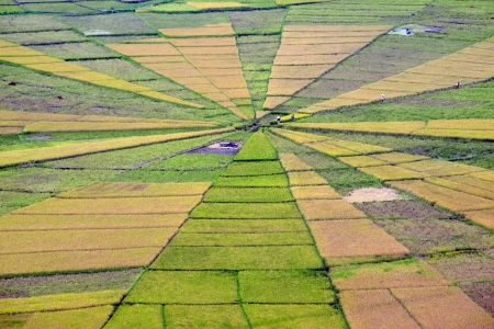Land art  Spider web like rice paddy field in Flores, Indonesia photo