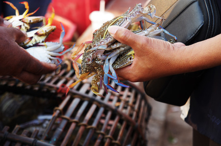 haggling: Crab trading at a market, fresh seafood still alive in hands Stock Photo