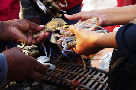haggling: Crab trading at a market, fresh seafood still alive changing hands Stock Photo