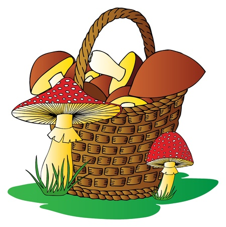 toxic mushroom: Basket with mushrooms