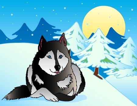 lying in: Dog lying in snowy landscape