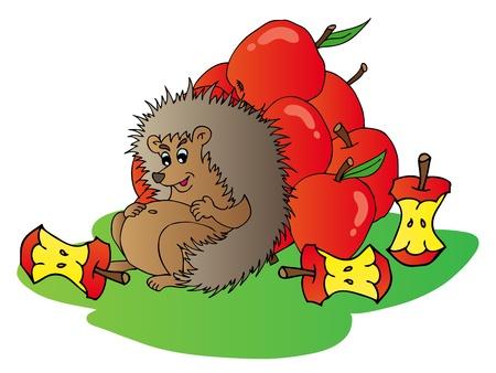manzana caricatura: Hedgehog con las manzanas