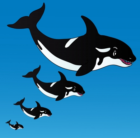 Orcas in the ocean - vector illustration  Vector