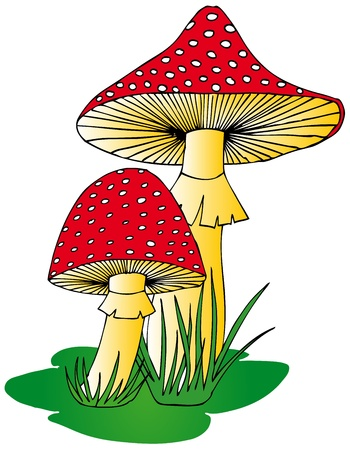 mushroom illustration: Toadstool in grass - vector illustration