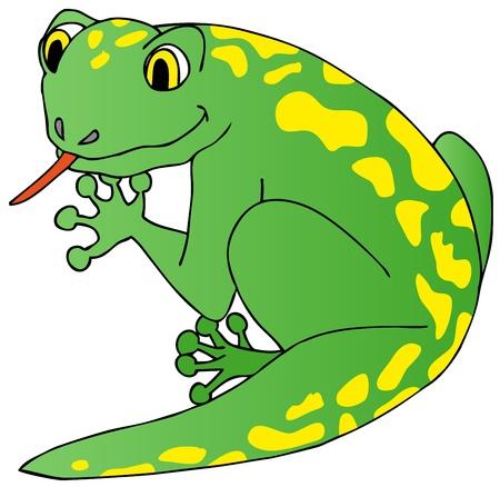 Lizard on white background - vector illustration  Illustration