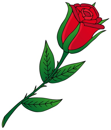 rose stem: Rose on white background