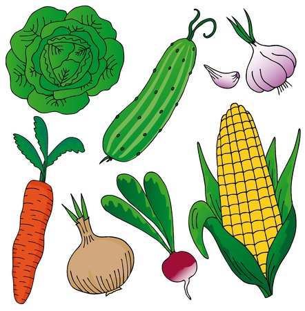 Vegetables on white background Stock Vector - 17205760