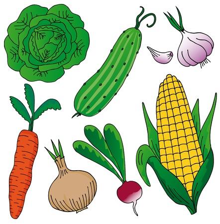 pepino caricatura: Verduras en el fondo blanco
