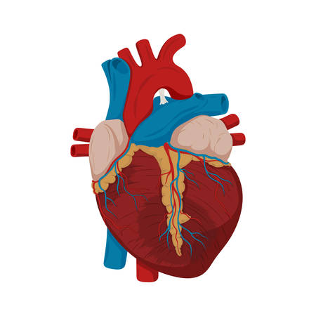 Ascending aortic aneurysm. Damaged heart muscle. medical science  illustration. Education illustration. Anatomy Ilustração
