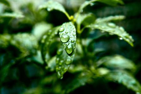 macrophotography: Drops