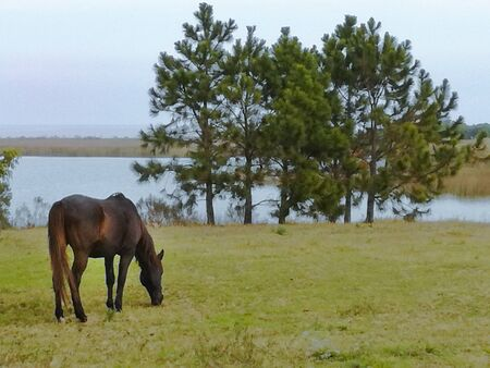 the horse eats grass and in the background the river is observed