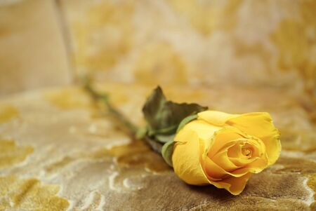 yellow rose on a textured tapestry