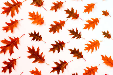 Oak leaf pattern autumn background