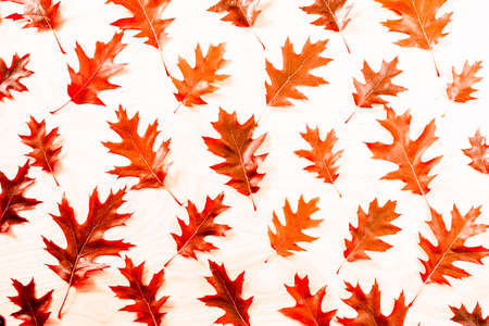 Red autumn Oak leaf pattern autumn background