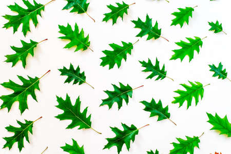 Abstract background of autumn oak leaves. Autumn background.