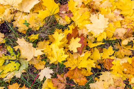 Colorful autumn leaves on the ground autumn background