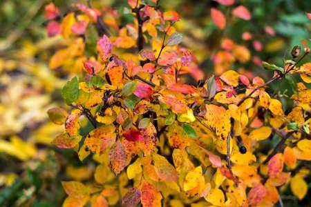 autumn red leaves autumn bushes