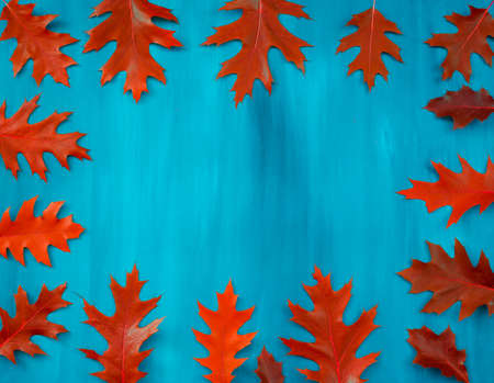 collection autumn leaves of oak isolated on white background