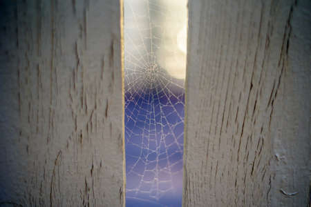 spider web woven in a wooden fence Stock Photo