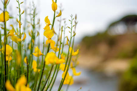 Summer Background. Flowers. Spring Background. Nature Background Yellow Flowers
