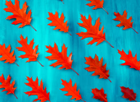 Red oak leaves pattern on a blue background