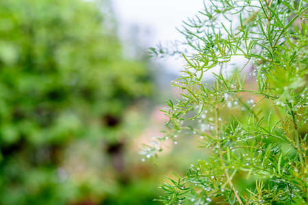 green plant background, raindrops on leaves, bright green background Stockfoto