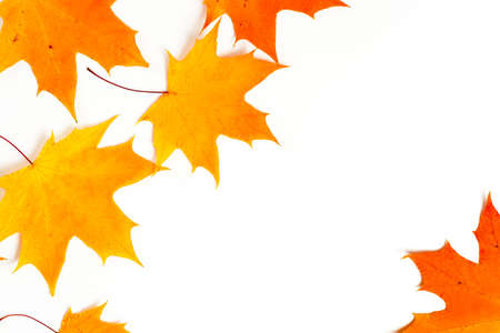 Autumn composition, maple leaves, frame, top view flat lay