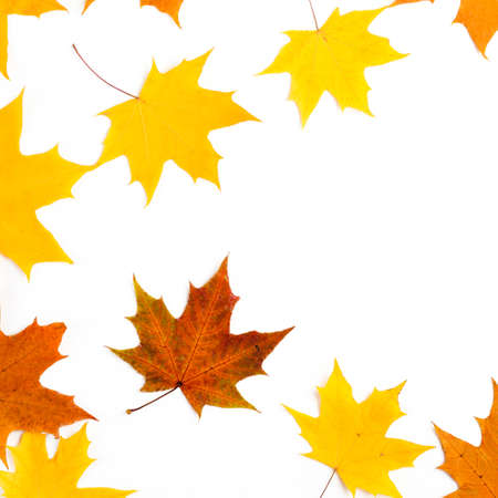 Nice border made from color falling maple leaves Imagens - 113045095