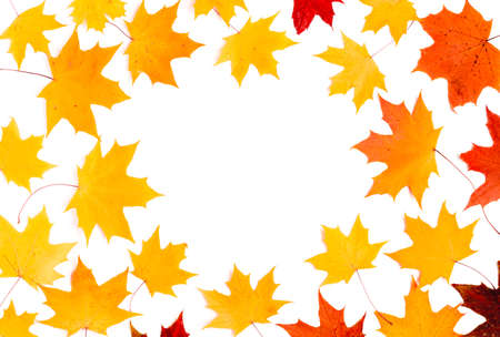 Nice border made from color falling maple leaves Imagens - 113044815