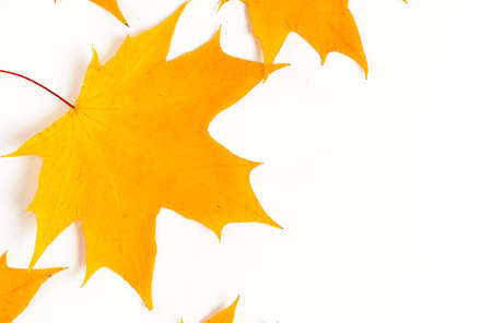 Autumn composition, maple leaves, top view, flat lay. Autumn, fall, halloween concept