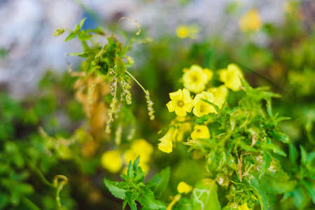 Summer, spring Background. Flowers. Nature Background. Yellow Flowers on green