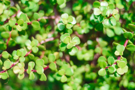 natural green bush background with selective focus