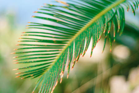 Tropical palm plant, green nature or save environmental concept.
