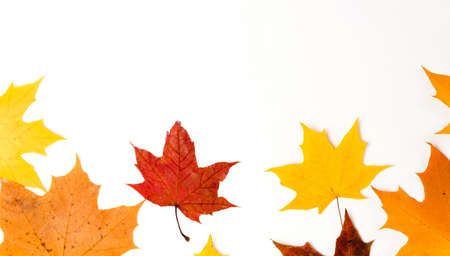 Autumn composition, maple leaves, top view, flat lay. Border made from color falling maple leaves Stockfoto - 128261177